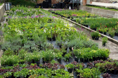 Rows of a wide variety of colorful plants and flowers available for purchase at Sycamore, IL garden center